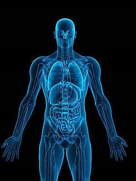 Human Body (2).jpg