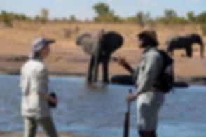 somalisa_expeditions071.jpg