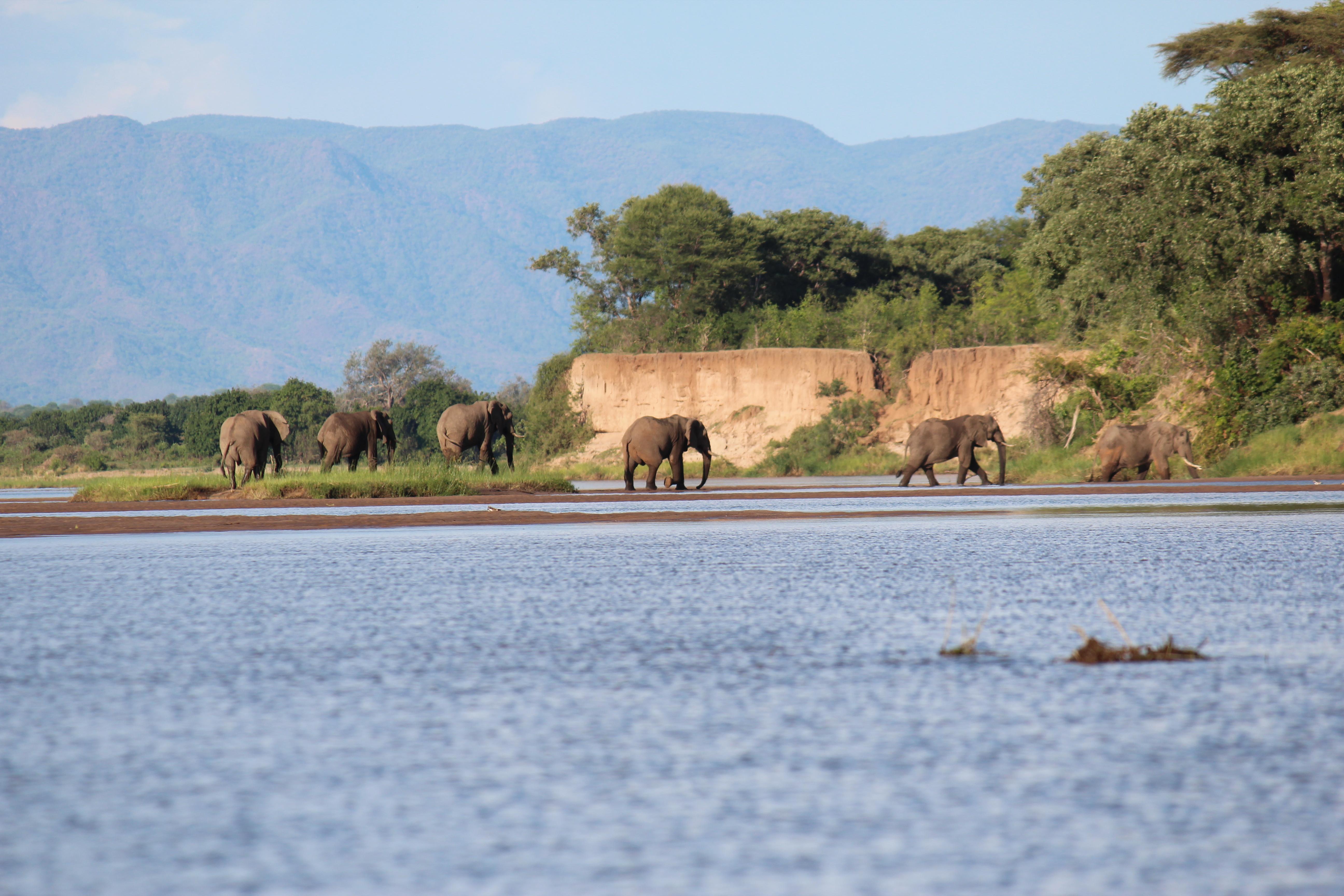 Zambezi Classic Short