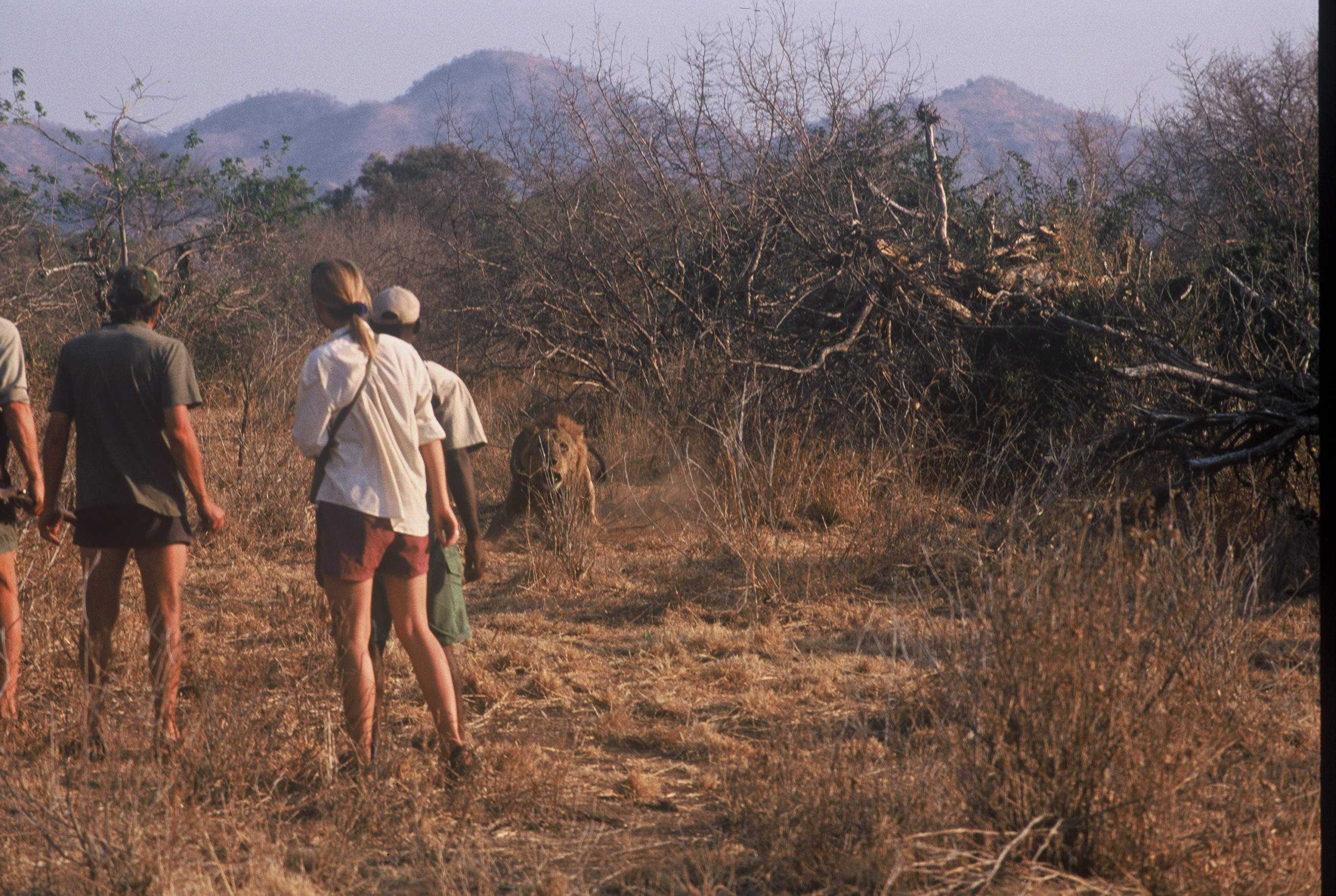 Mana Shoreline Walking Safari