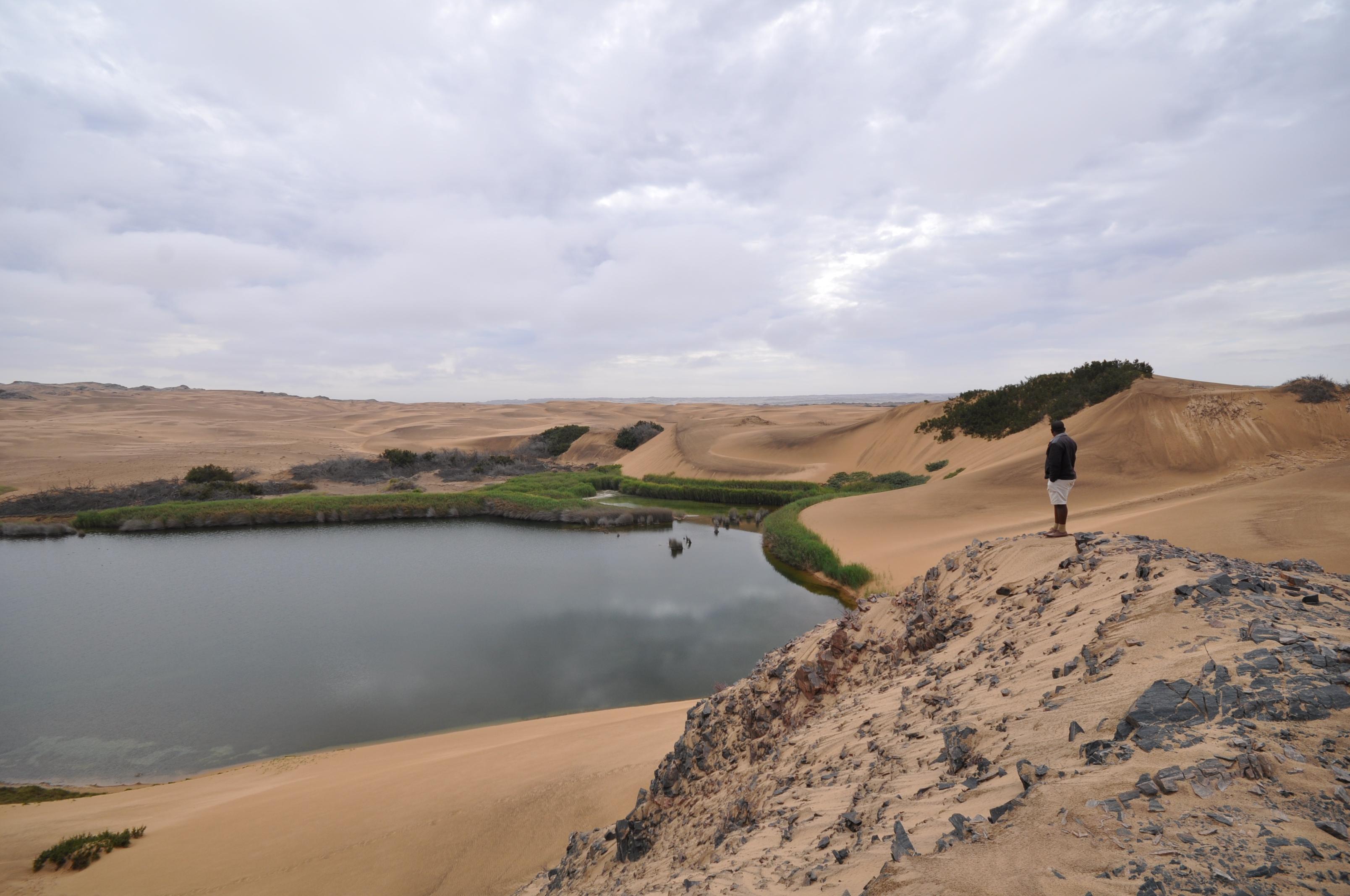 Splendid Deserts