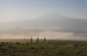 Tortilis Camp - Bush Walk - Kilimanjaro.jpg