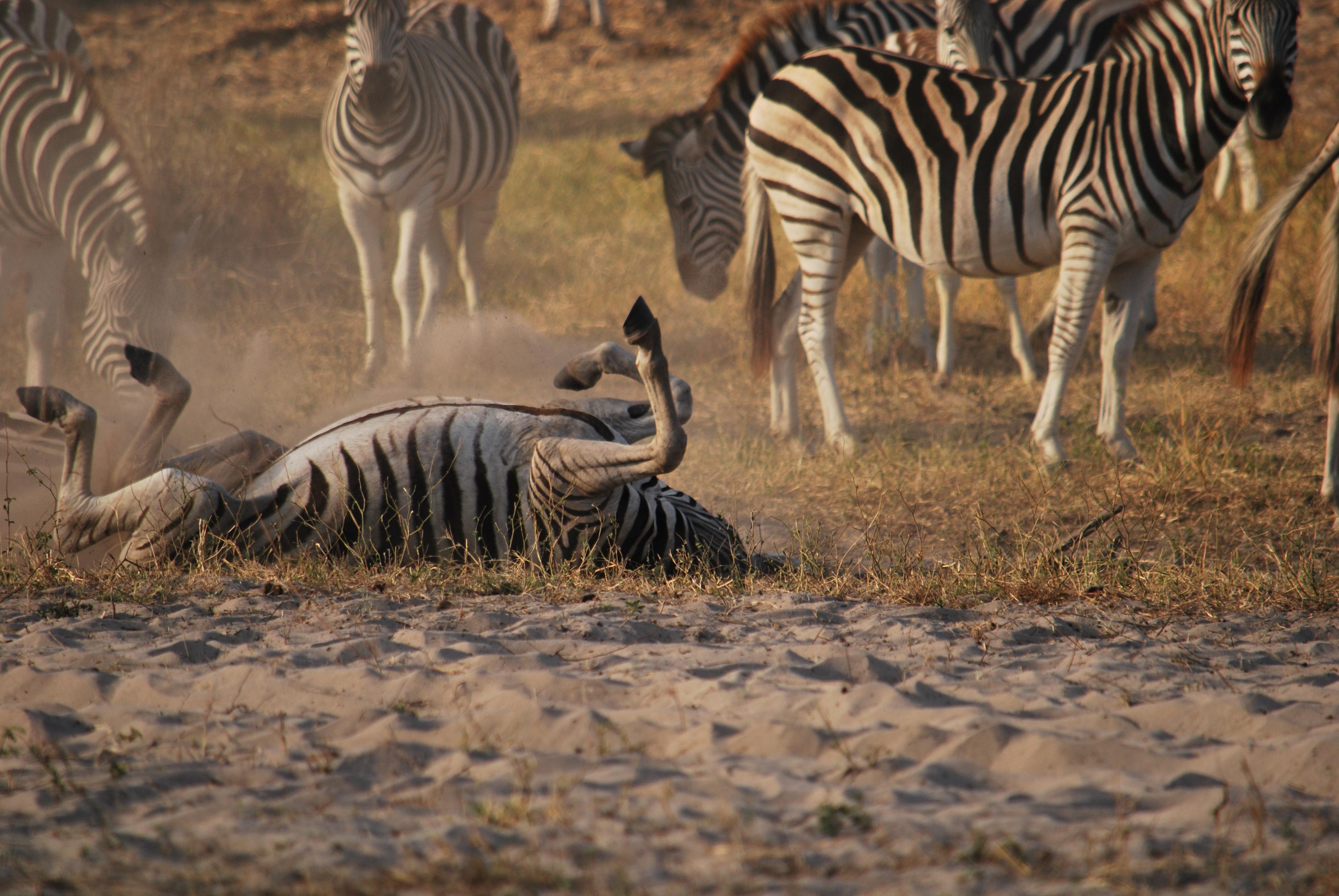 Desert Safari Expedition
