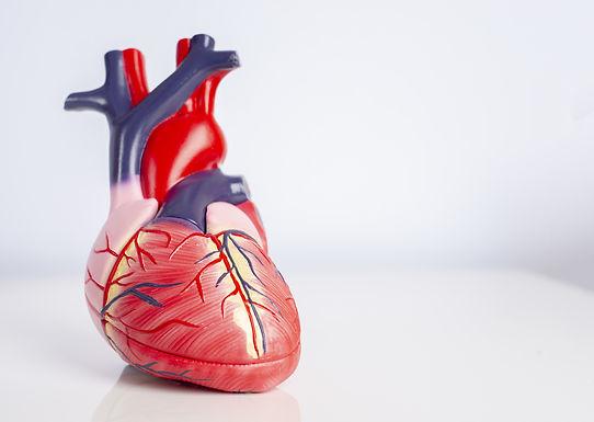 Check-up cardiovascular