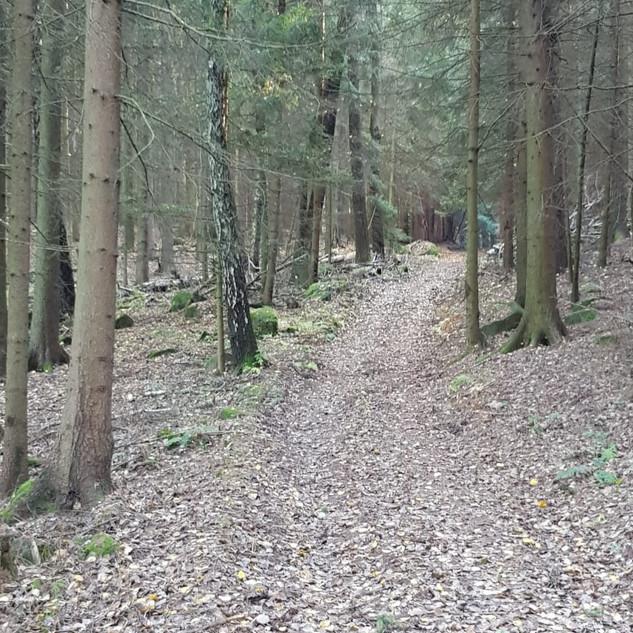 Floresta 4.jpeg