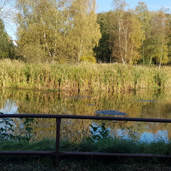 Lago2.jpeg