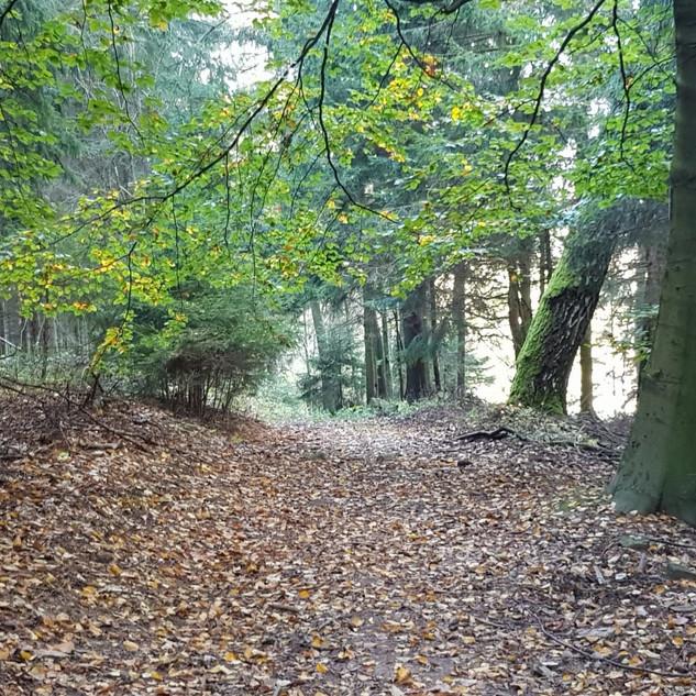 Floresta3.jpeg