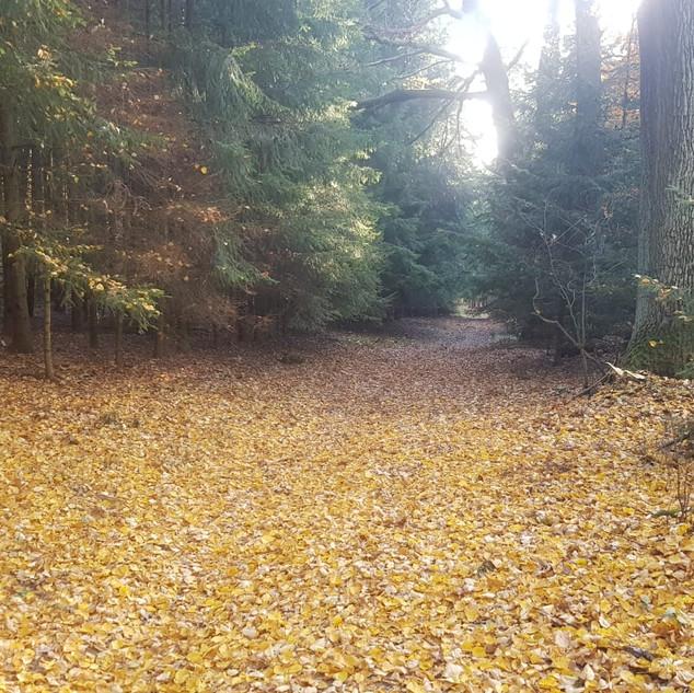 Floresta5.jpeg