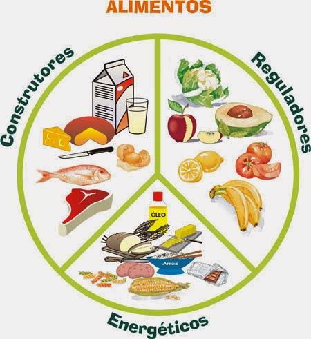 alimentos energeticos reguladores y constructores