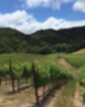 Trefethen-vineyard.jpg