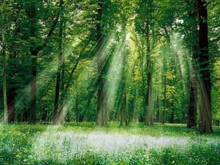 Sustentabilidade ambiental também é nossa responsabilidade como espíritas!