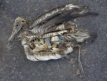 Albatross Plastik.jpg