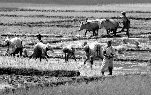For seeking enforcement of Farmers Acts Hindu Dharma Parishad moves to SC