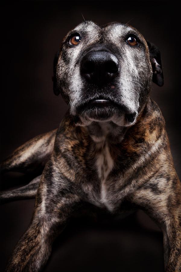 Brisbane Pet Photographer