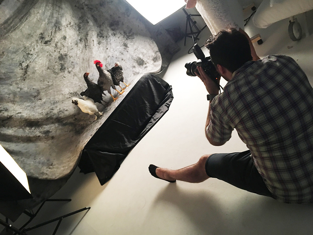 Red Hill Photographer photographs Chickens