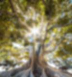 jeremy-bishop-556948-unsplash.jpg