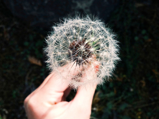 Acupuncture et allergies