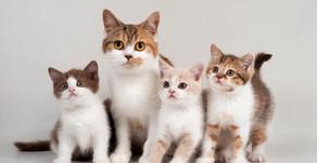 Kedi, Sizi Ve Evinizi Negatif Enerjiden Koruyan Sihirli Bir Evcil Hayvandır