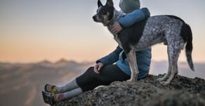 Bilim Onayladı: Köpekler Kötü İnsanları Tanıyabiliyor