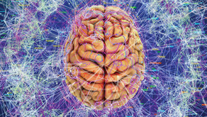 Beyin Kullanım Kılavuzu