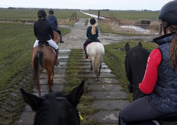 Te paard in de polder