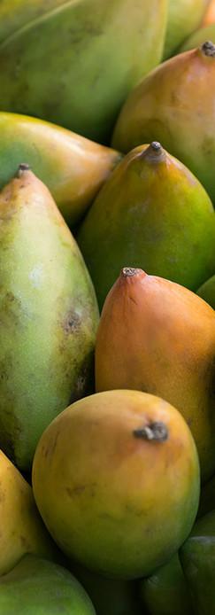fresh-colorful-tropical-mangoes.jpg