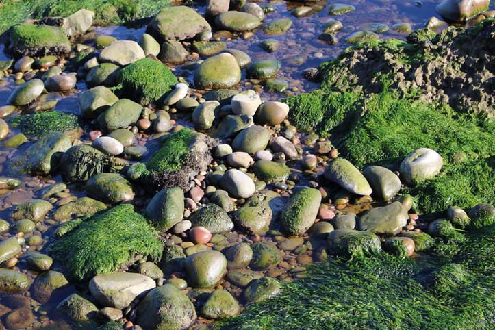 Close up of seaweed and algae
