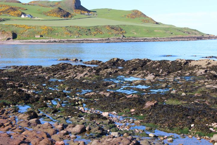 Seaweed covered rocks