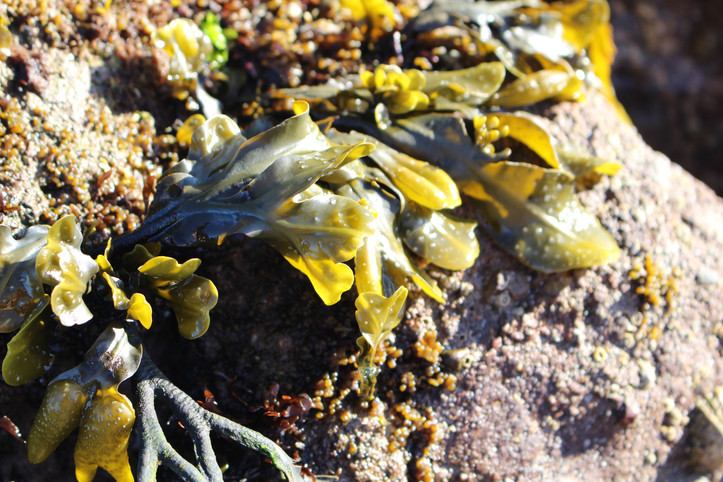 Colourful seaweed and algae