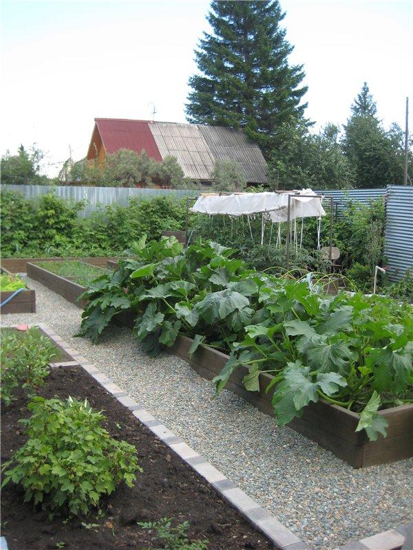 Огород может быть красивым и удобным
