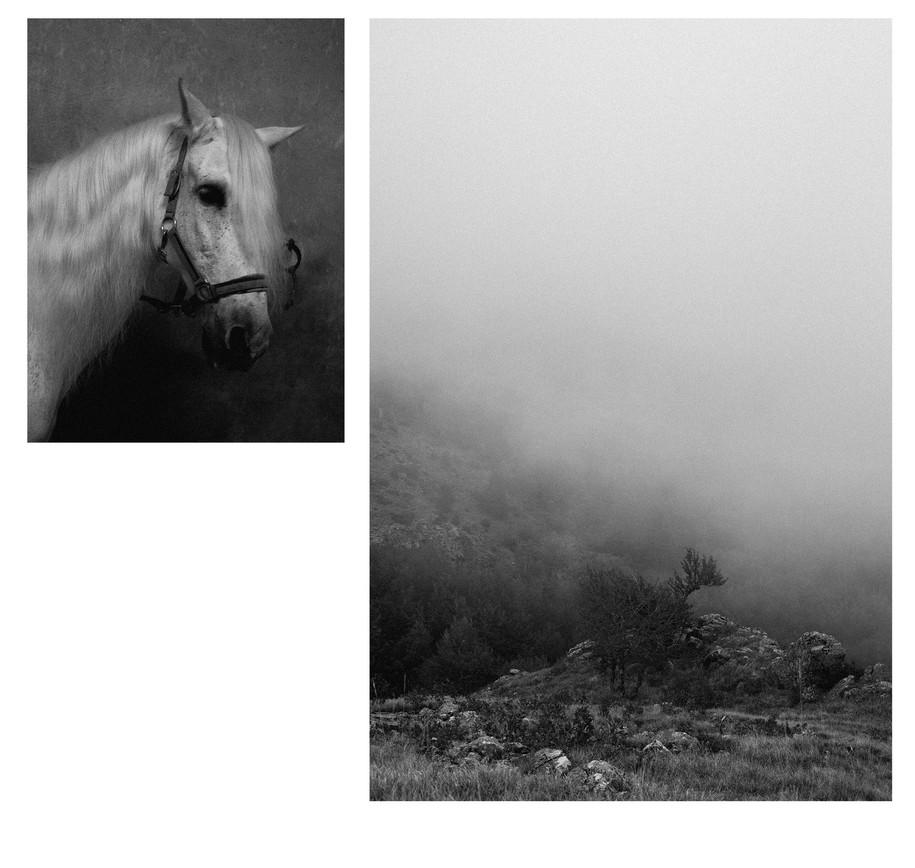 Cavallo---Sella-dei-Generali-7.jpg