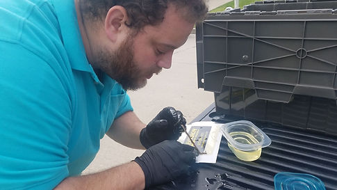 Snake Saving in DFW Texas by Big E's Pest & WildLife Management.
