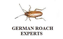 German Roach Experts.jpg