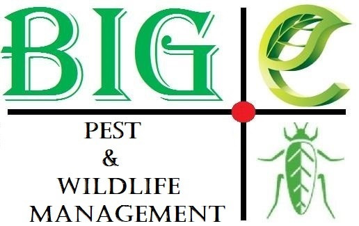 Pest and Wildlife control, The Colony Texas