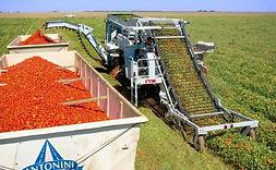 tomato-harvester.jpg
