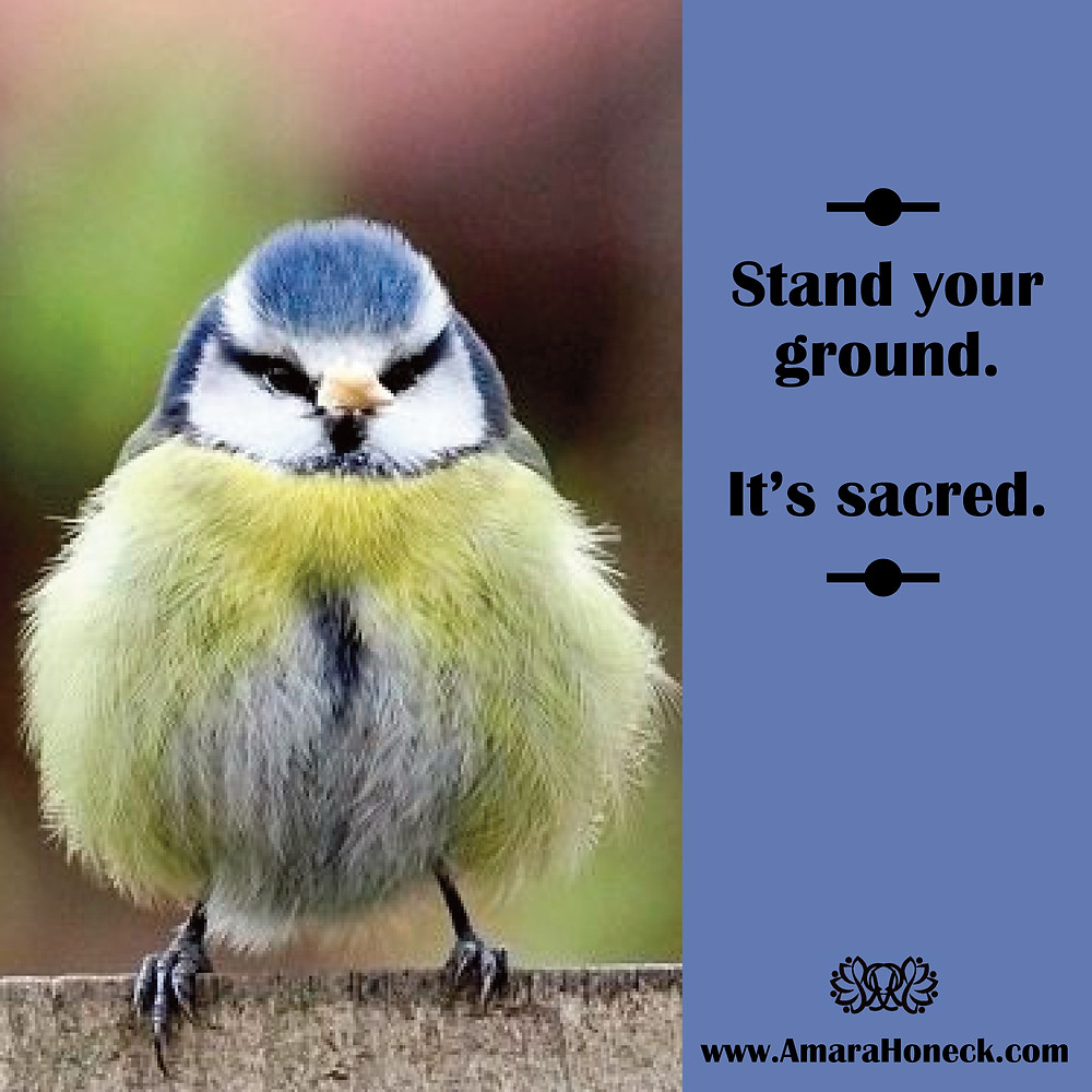 Blue Yellow Bird Standing | Spiritual Growth Article | Amara Honeck | Tennessee Shaman Consciousness Exploration Teacher