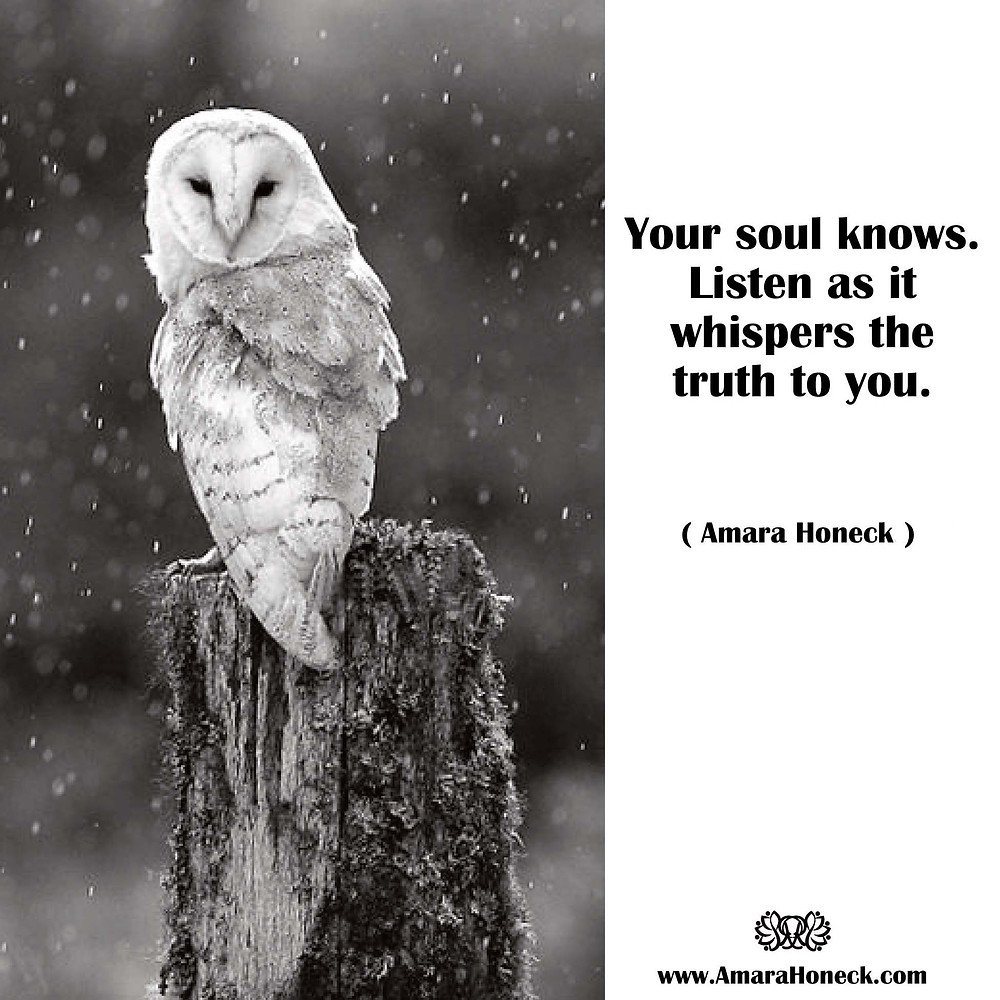 Your soul knows. Listen as it whispers the truth to you. -- Amara Honeck | Barn Owl in Snow | Spiritual Growth Article | Tennessee Shaman Consciousness Exploration Teacher