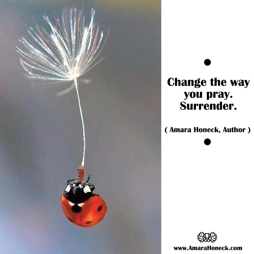 Ladybug Flying on Dandelion | Spiritual Growth Article | Amara Honeck | Tennessee Shaman Consciousness Exploration Teacher