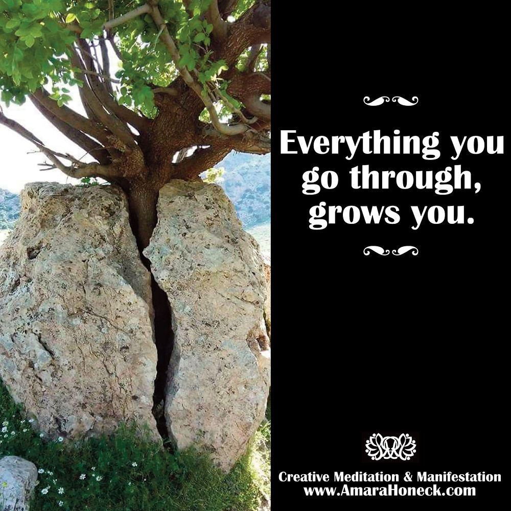 Tree Growing From Rock | Spiritual Growth Article | Amara Honeck | Tennessee Shaman Consciousness Exploration Teacher