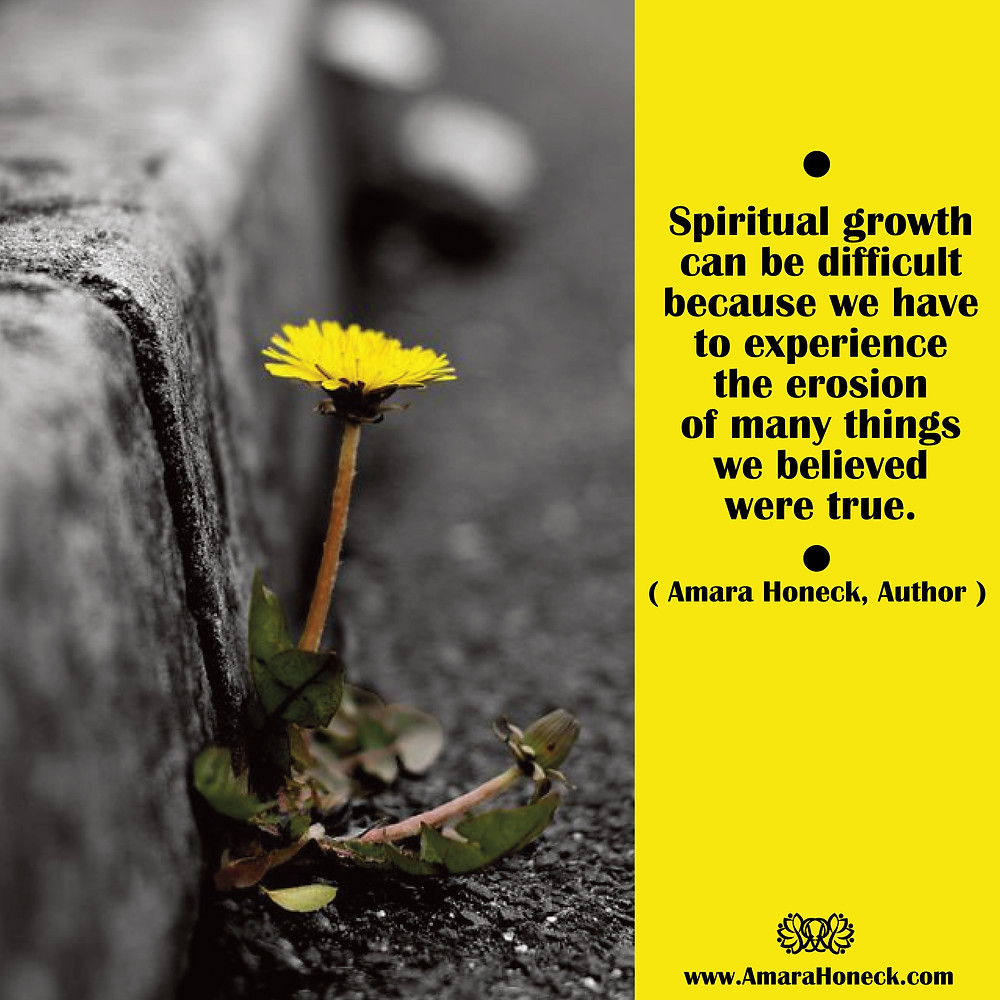 Dandelion Growing in Cement | Spiritual Growth Article | Amara Honeck | Tennessee Shaman Consciousness Exploration Teacher