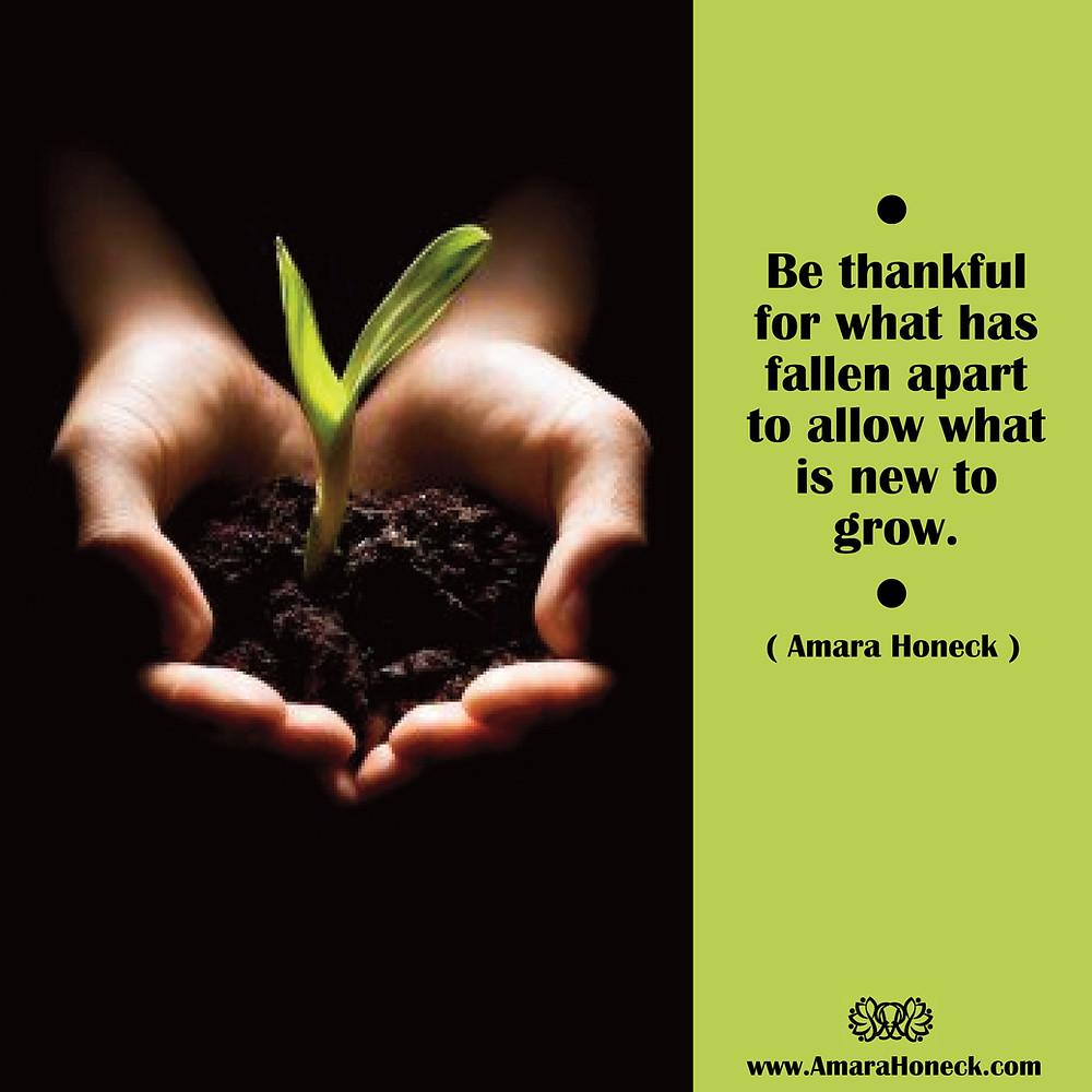 Hands Holding Plant | Spiritual Growth Article | Amara Honeck | Tennessee Shaman Consciousness Exploration Teacher