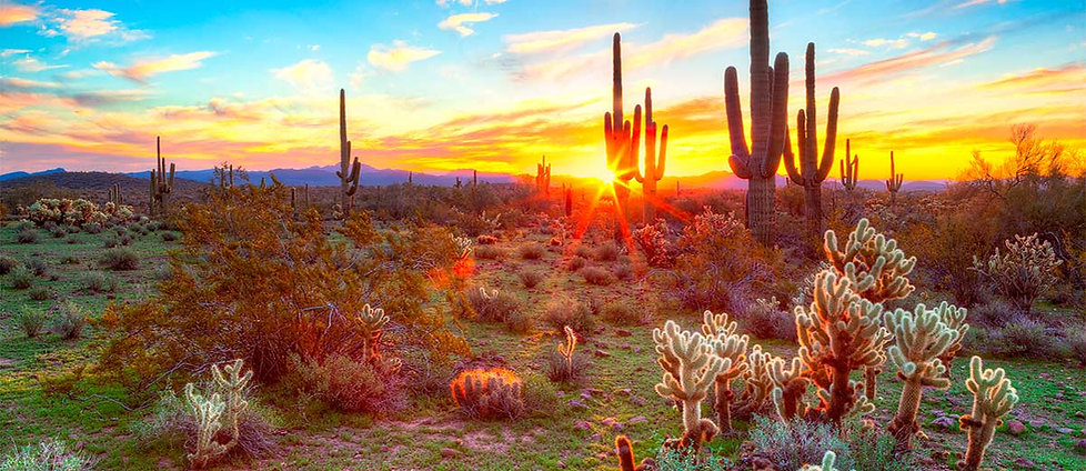 Saguaro3.jpg