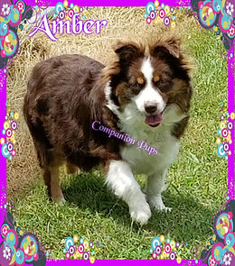 Amber wm.jpg