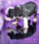 pizap.com15789410107579.jpg
