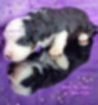 pizap.com15789409166345.jpg