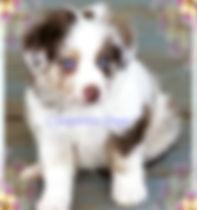 pizap.com153348878306735.jpg