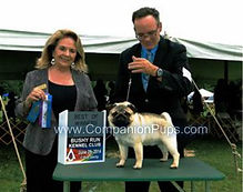 Kiwi at show winning a ribbon and getting points at AKC sanctioned show.