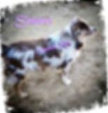 pizap.com155370617046711.jpg