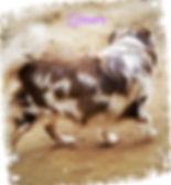 pizap.com157297663211711.jpg