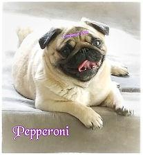 pizap.com15562071036856.jpg